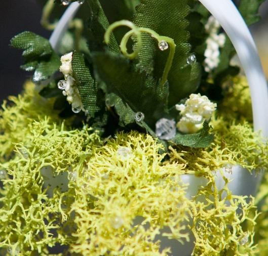 11 Miniature Ferns