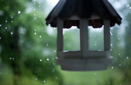 A Rainy day in May.