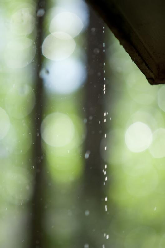 Rain in May, drip drip drip...