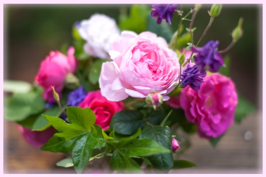 The bright pink roses are Zepherine, the pale pink is Sceptre'd Isle and the barely pink is Blush Noisette. The purple flowers are Columbine. The scent has completely filled my dining room.