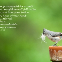 You are more valuable than many sparrows