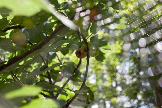 Figs 2013-4