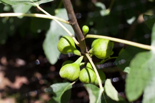 Figs 2013-6