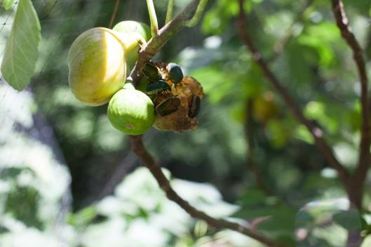 Figs 2013-8