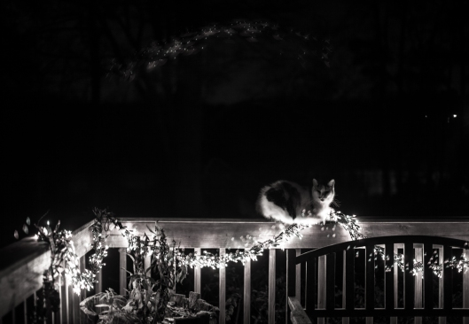 Our cat Matey enjoys the warmth of the Christmas lights.