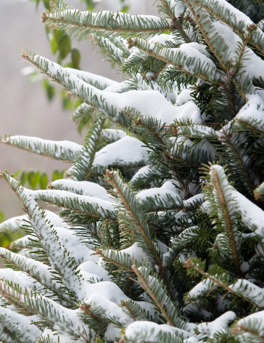 Jan 28 snow 4