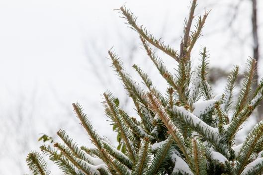 Jan 28 snow 5
