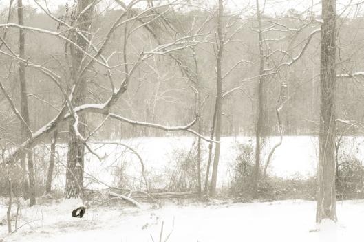 Jan 28 snow 6