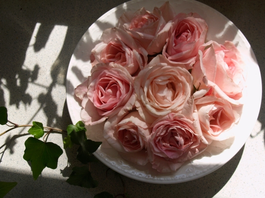 The roses are cut just under the calyx and placed in water in a bowl.