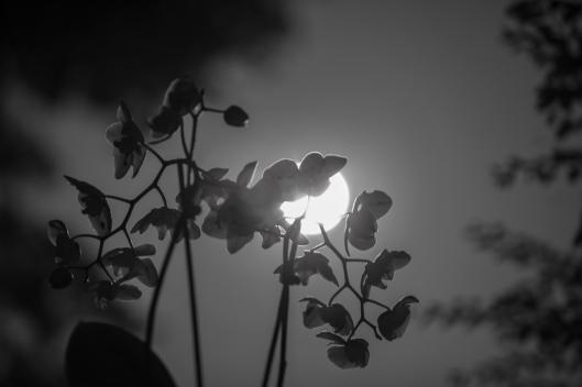 July Moon-3