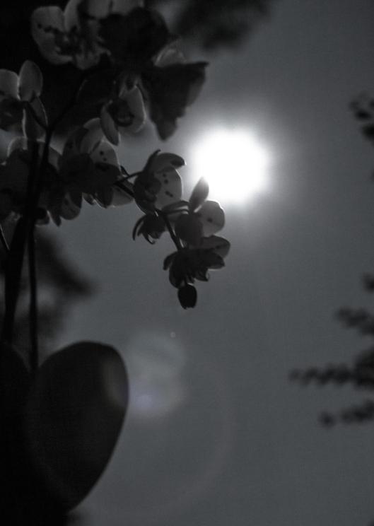 July Moon-4