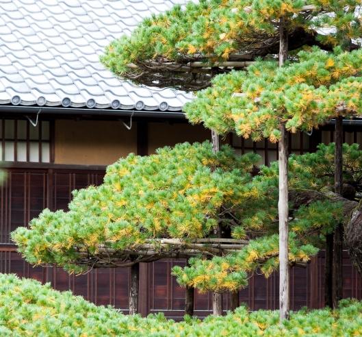 4 Japan tree Kyoto