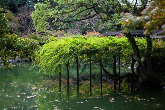 7 Japan tree Kyoto