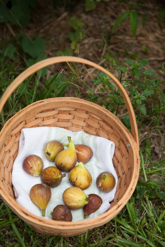 Ripe figs in a basket.