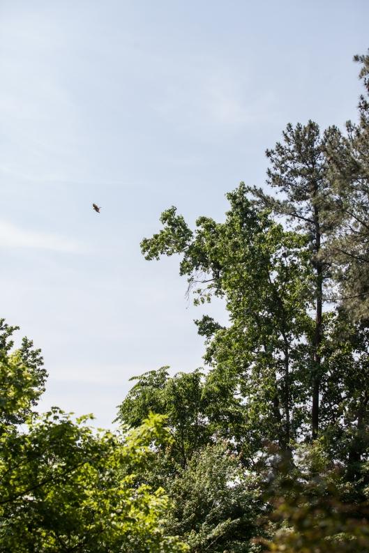 10-baby-hawks-2014