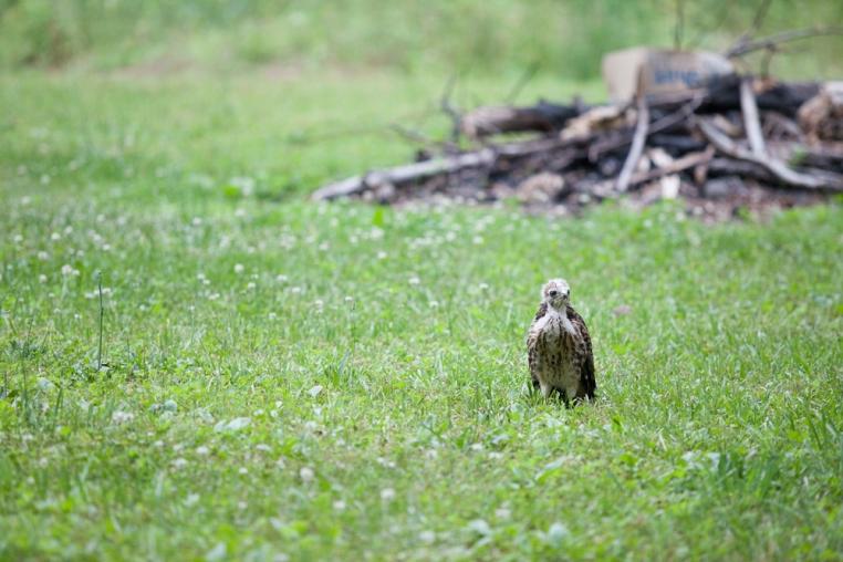 1b-baby-hawks-2014