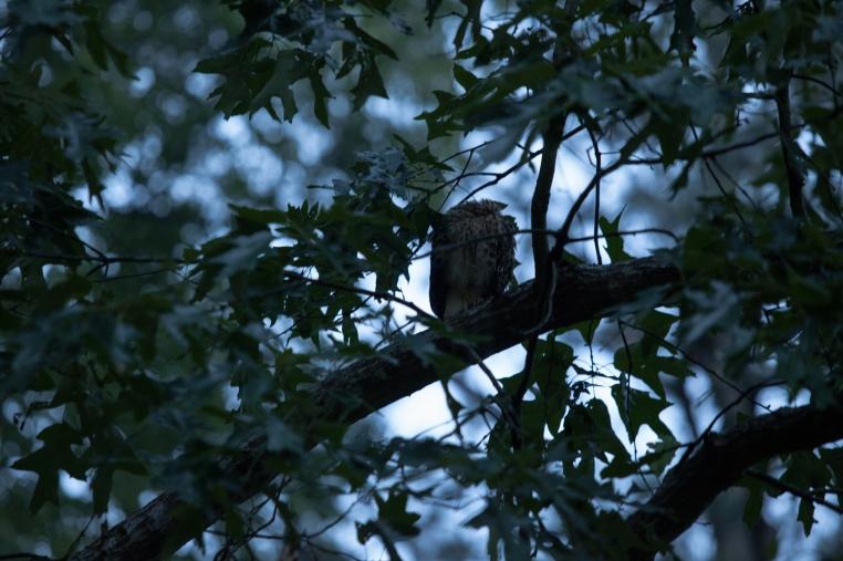 7-baby-hawks-2014