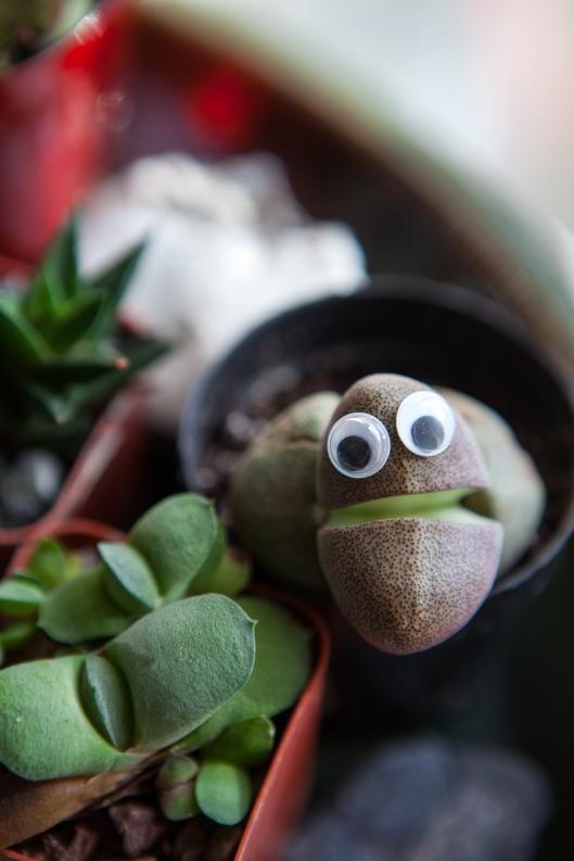 Scruffy succulent.