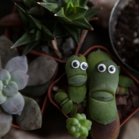 Eyes on Succulents