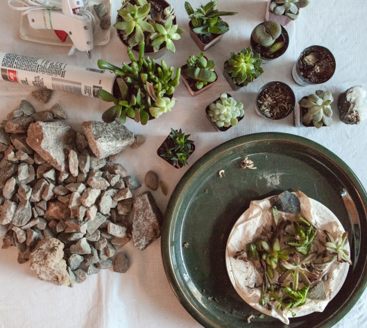 1-succulent-arrangement-materials