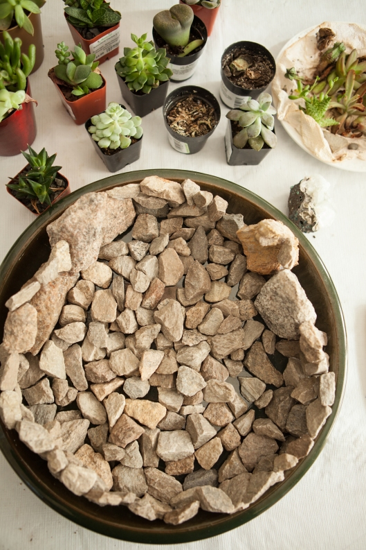 3-succulent-arrangement-stone-drainage