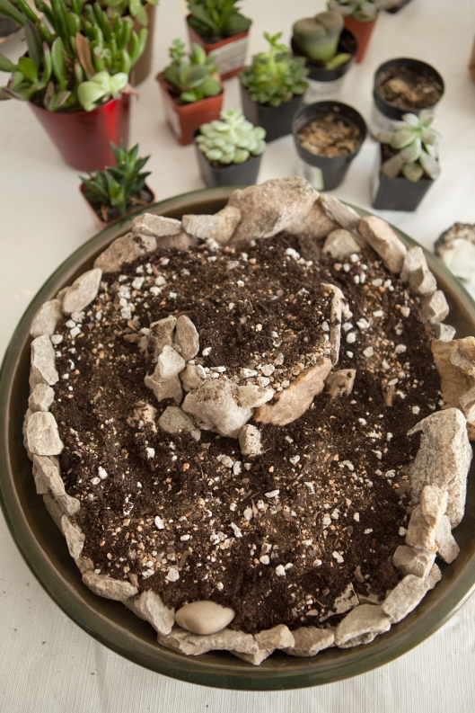 5-succulent-arrangement-layer-of-cactus-succulent-soil