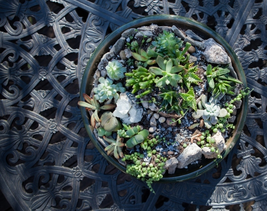 7-succulent-arrangement